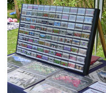 picture of my display at the summer fete